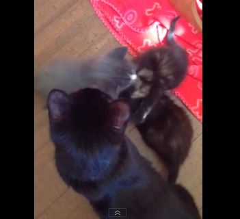 Mother Cat and Kittens Abandoned at Roadside Now Rescued