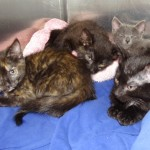 Rescuers Take in 37 Kittens Found in a Dog Crate Along the Highway