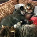 Kittens Found in Abandoned Car Towed to Auto Repair Shop