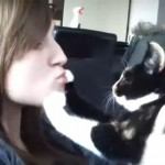 Funny Cats And Dogs Hate Kisses Compilation