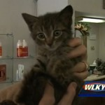 Police Officers Rescue Woman and Her Kitten from Fire