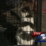 Storm Chasers rescue cat from Vilonia, Arkansas tornado damage