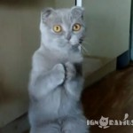 Cats Begging for Food Compilation