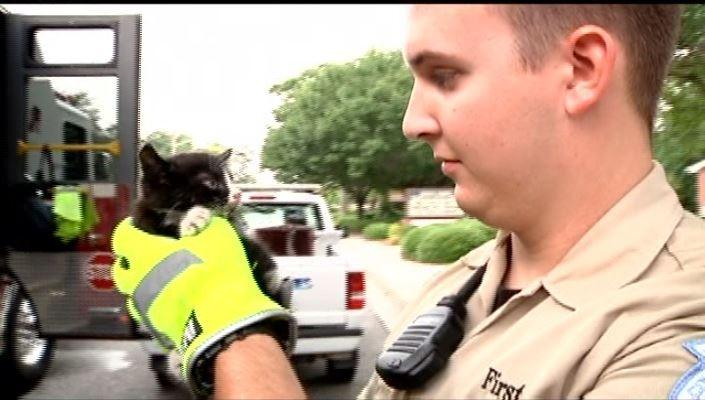 Myrtle Beach Firefighters Rescue Kitten from Engine of TV News Car