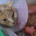 Tiger the Cat is Brought Back to Life