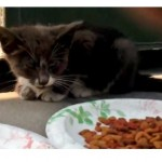 Scared, Hungry, Crying Kitten is Rescued