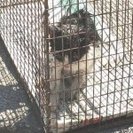 Girl's Kitten is Rescued from Storm Drain After Several Days