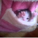 Kitten In My Pocket