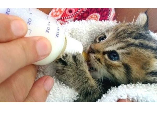 Cute Kittens And Puppies Bottle Feeding Compilation