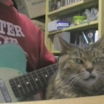 Kitty Listens to the Guitar