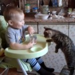 Too Cute Friends : Baby Feeds His Kitten