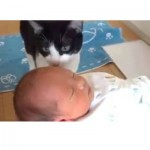 Cats And Dogs Meeting Babies For The First Time Compilation