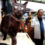 Japanese Couple is Reunited with Cat 3 Years After Tsunami Disaster