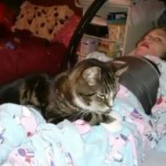 Miracle girl and rescued cat make 'purrfect' pair