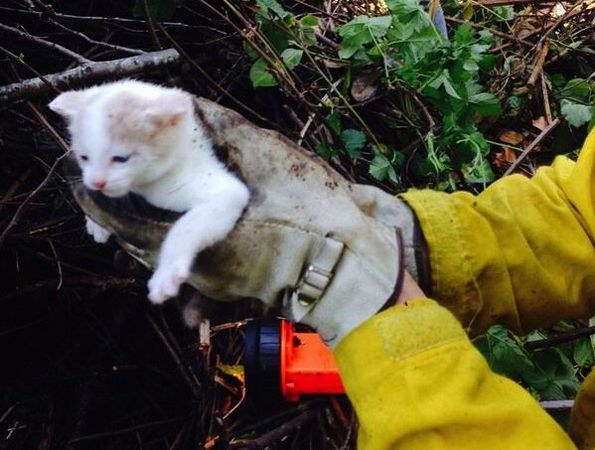 Kitten is Rescued and Adopted by Firefighters