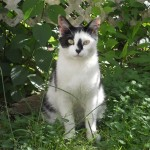 Memorial for Yonkers Cats to be Held Saturday May 10