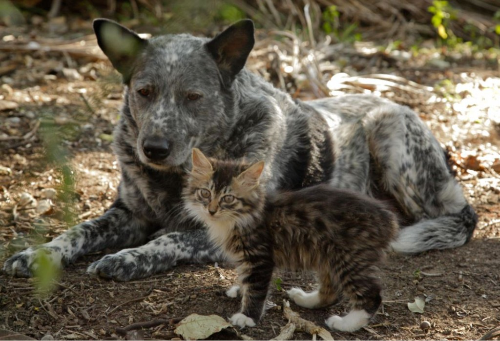 Ralphee and Max: Disabled CH Kitten is Befriended by Dog