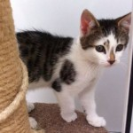 Kitten Born in a Van and Fostered with the Help of 2 Dogs is Ready for a Home