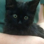 Kitten Hit by Car is Miraculously Nursed Back to Health
