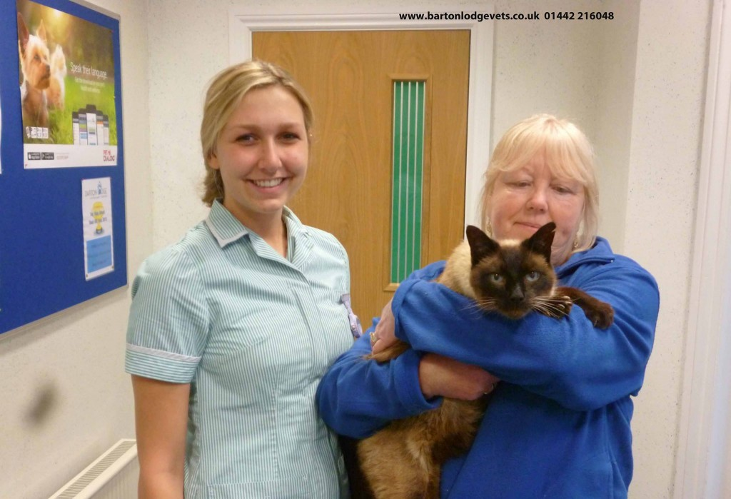 Missing Cat is Reunited with his Family After Living 3 Years as a Stray, 15 Miles from Home