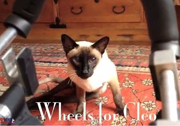 Wheels for Cleo