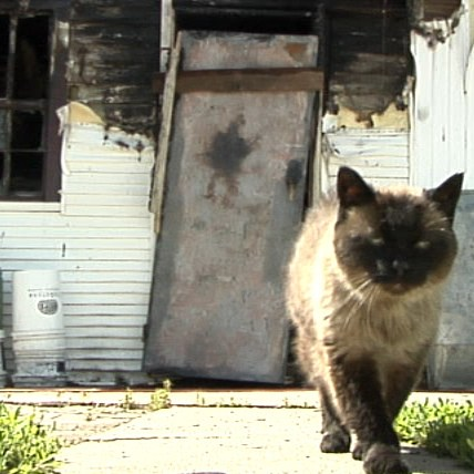 17 Year Old Cat Alerts Family to Fire
