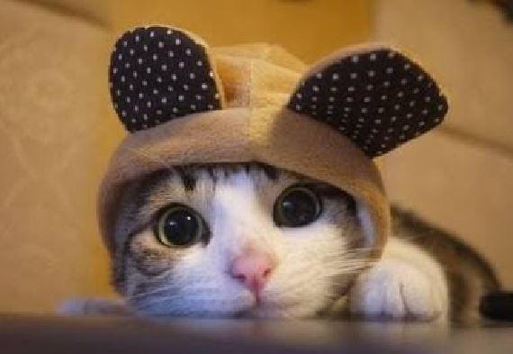 10 Cute Cat Videos Compilation