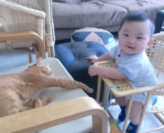 Baby Plays with Cat's Paws