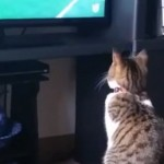 Cats and Dogs Watching the World Cup 2014