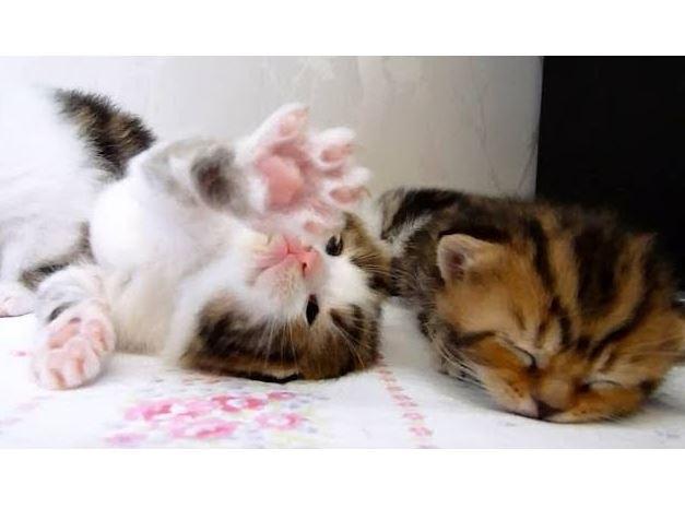 Kitten Oscar loves his mom and sleep