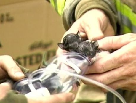 Firefighters Rescue Kittens From Fire At Vacant House