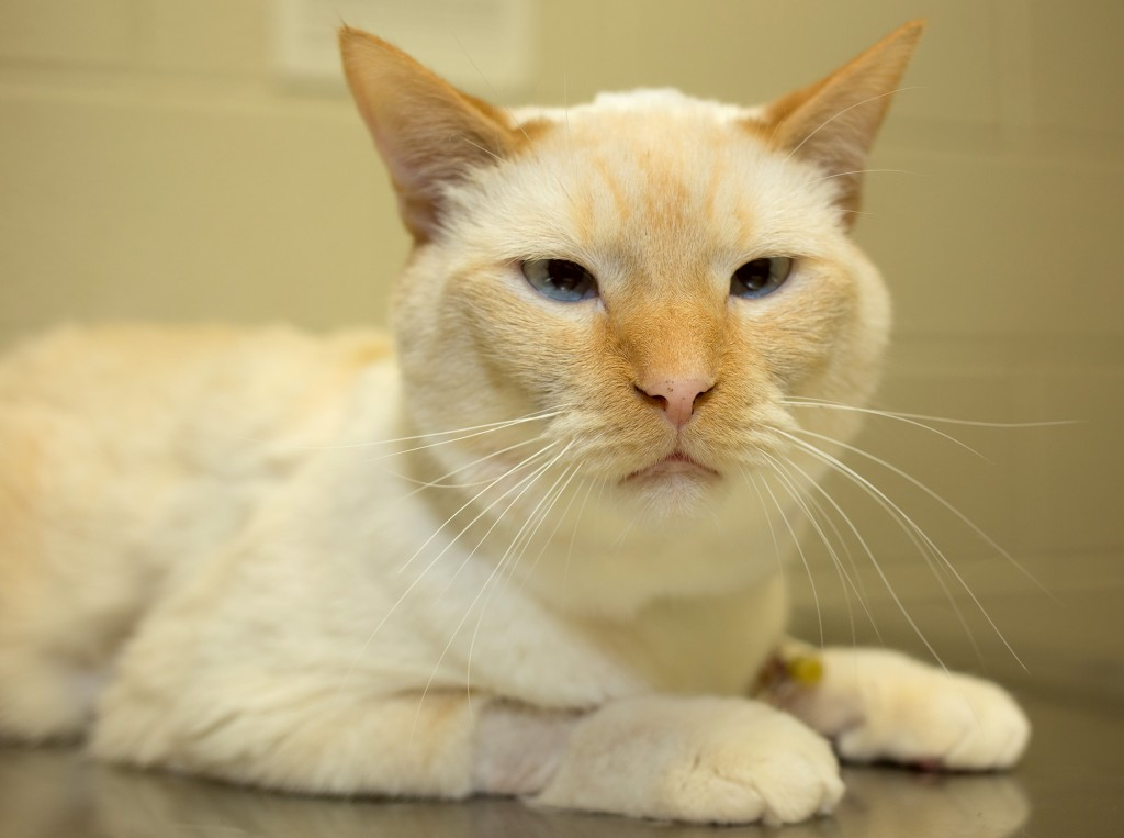 Arthur-kidney-transplant-cat-9903