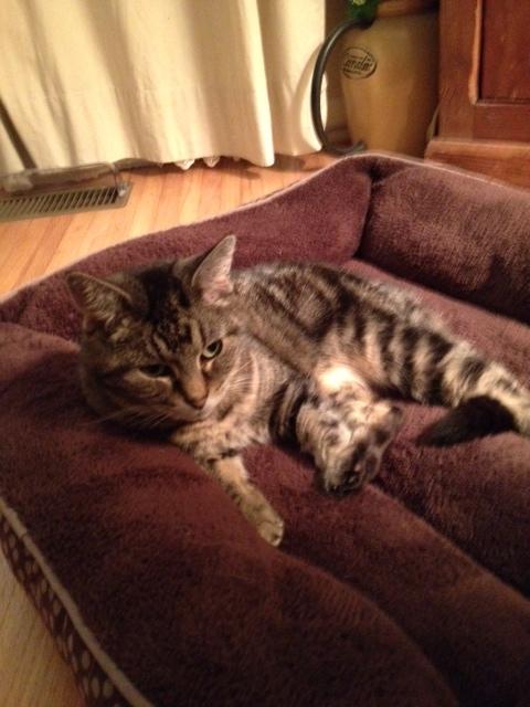 Volunteer's Love and Patience Wins Untrusting Cat's Affection