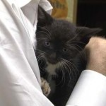 Kitten is Rescued from Narrow Underground Pipe