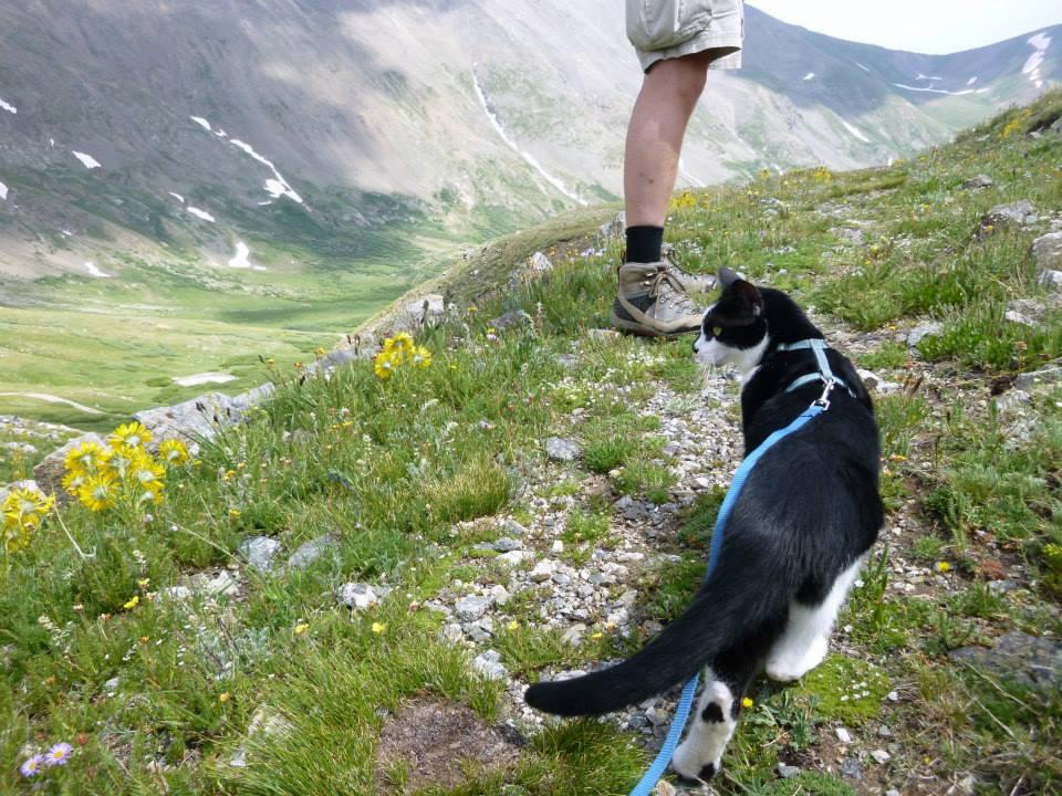 Paul the Cat Climbs a Mountain