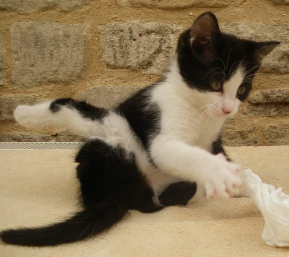 Bonnie Kitten: Disabled Kitten Gets Help