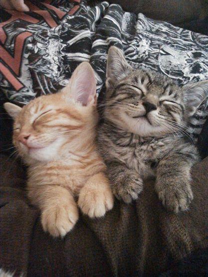 Loki and Stewie