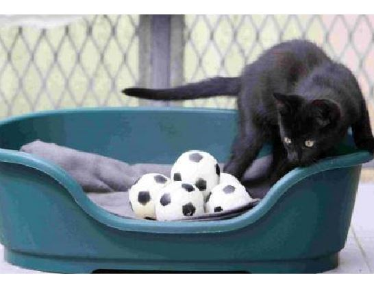 World Cup Loving Kitten Finds a Home