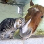 Cat and Horse are Friends