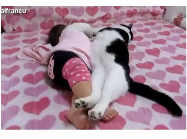 Cats And Dogs Sleeping With Babies Compilation