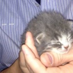Unweaned Kitten Trapped Under Floor is Rescued After 3 Days