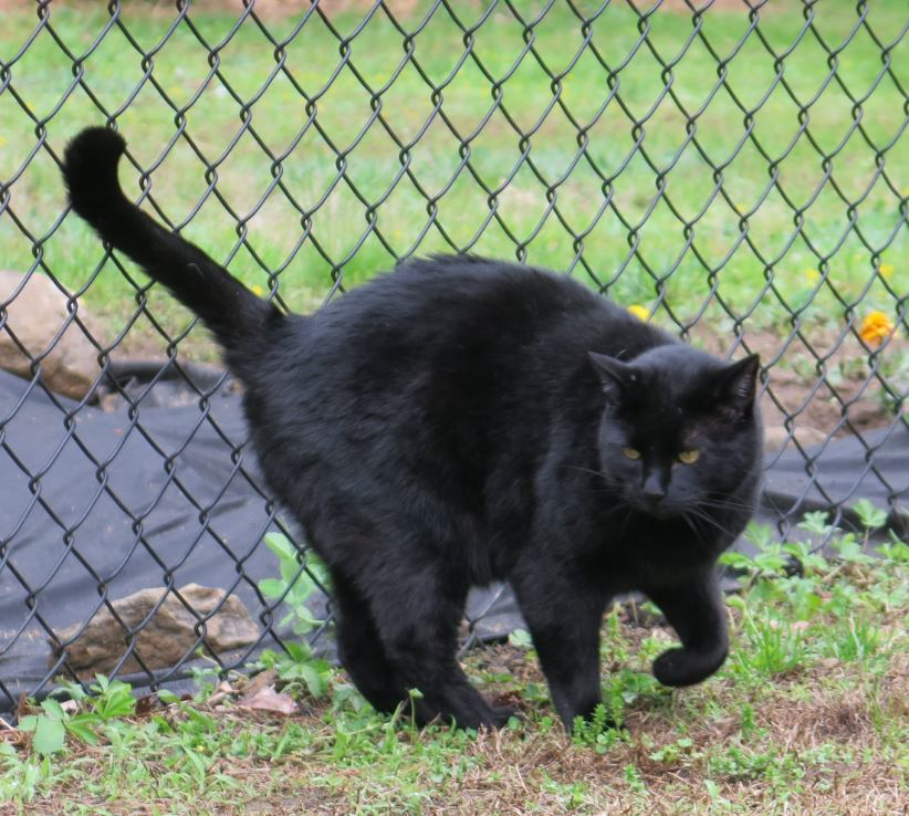 ALLEY CAT ALLIES OFFERS SUMMER SAFETY TIPS FOR OUTDOOR CATS