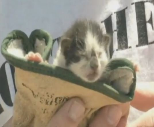 Kitten Found in Rubble at House Demolition Site