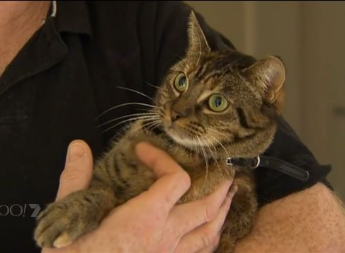 Newly Adopted Cat Saves Family's Home from Fire