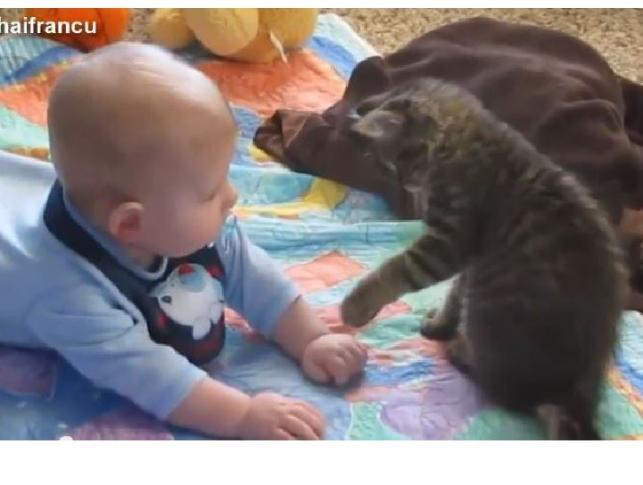 Cats And Babies Compilation