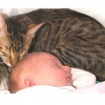 Ultimate Cats Love Babies Compilation