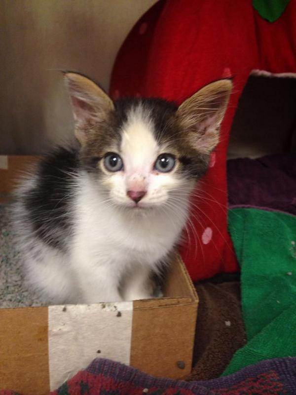 Firefighters Save Trapped Kitten in 4 Hour Rescue Operation