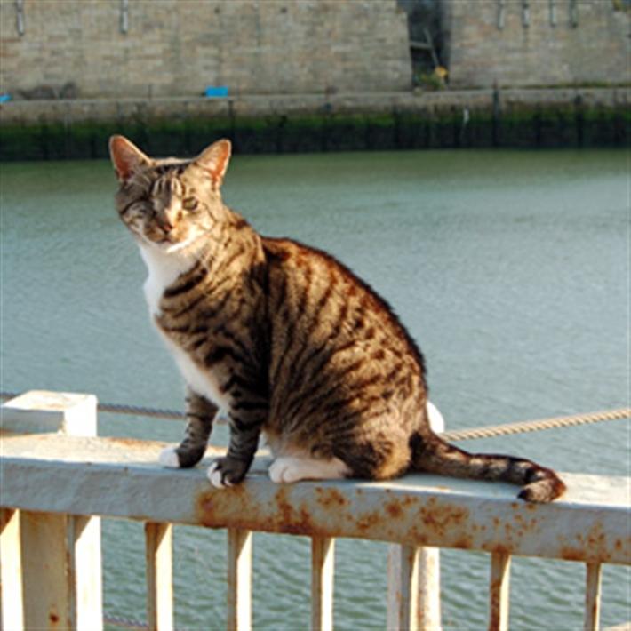 Nelson-Seaham-Docks
