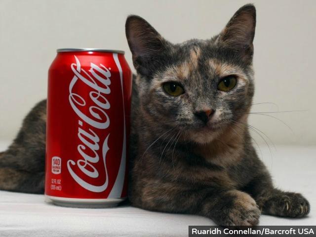 pixel-mini-mew-cat-barcroft
