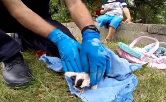 GoPro Video: Firefighters Rescue Two Kittens